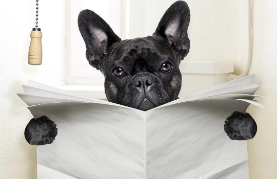 sognare cacca di cane